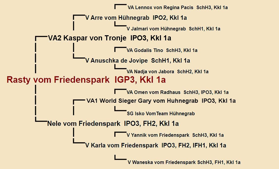 Rasty vom Friedenspark Pedigree
