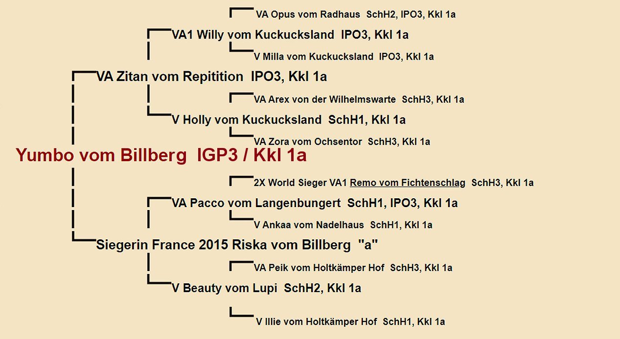 Yumbo vom Billberg Pedigree