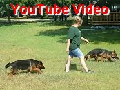 Tim - Enna Older Male Puppies Video