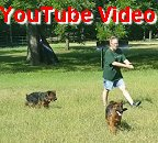 Tim - Enna Older Male Puppies Video #2